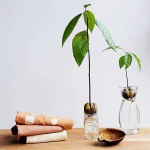 plant-dye-avocado